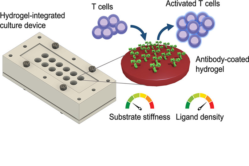 Paper on culture device for T cell activation out now
