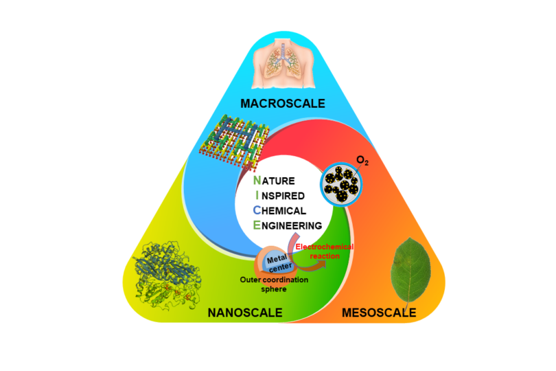RSC and Chemical Society Reviews publish review by Dr Trogadas and Prof Coppens on 'Nature-inspired electrocatalysts and devices for energy conversion'